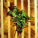 Hacher un bon bouquet de menthe fraîche