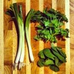Oignons verts, coriandre et menthe fraîche