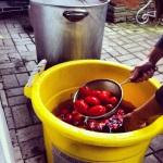 Bain d'eau froide après avoir blanchi les tomates
