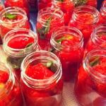 Mise en pot des tomates avec des feuilles de basilic